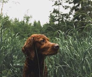 dog and happy image