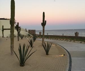beach and cactus image