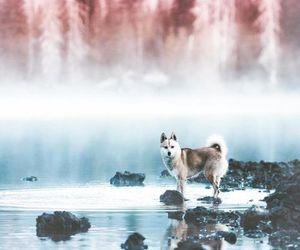dog, animal, and nature image