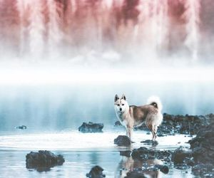 dog, nature, and animal image
