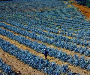 agave and jalisco image