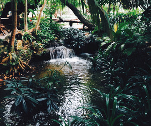 tropical and jungle image