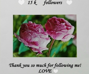 flowers, followers, and pink image