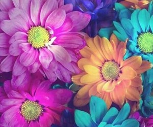 colors, flores, and flower image
