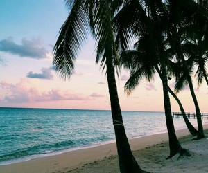 beautiful, beach, and palm trees image
