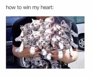 cats and how to win my heart image