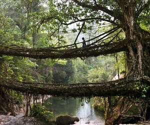 tree, bridge, and india image
