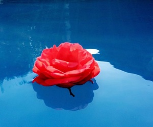 blue, pool, and red image