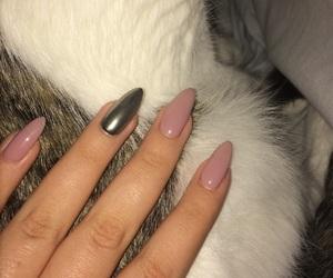 cat, mirror, and nail image