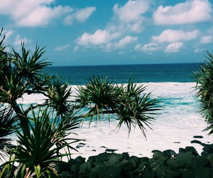beach, tropical, and summer image
