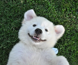 dog, cute, and happiness image