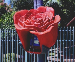 flowers, phone, and red rose image