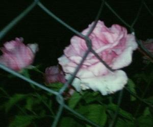 dark, grunge, and rose image
