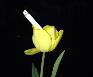 cigarette, flower, and grunge image