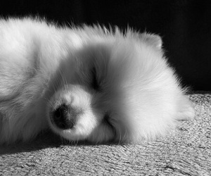 dog, black and white, and puppy image