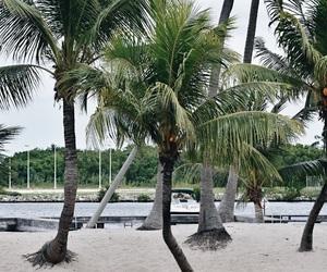 aesthetic, beach, and Island image
