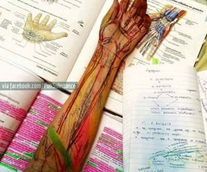 medicine, anatomy, and biology image