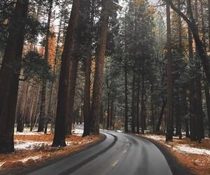 adventure, autumn, and street image