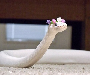 snake, white, and flowers image