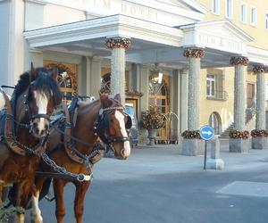 pferde, winter, and schweiz image