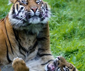 canon, chester, and cub image