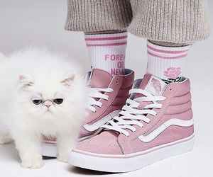 pink, cat, and socks image