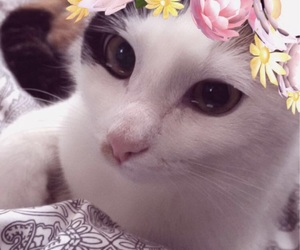 filter and kitty image