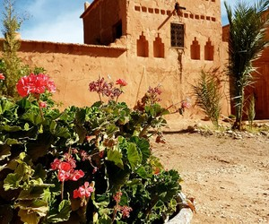 castle, desert, and flowers image