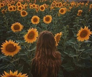 sunflower, flowers, and outdoors image
