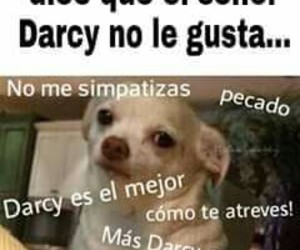 darcy, frases, and humor image