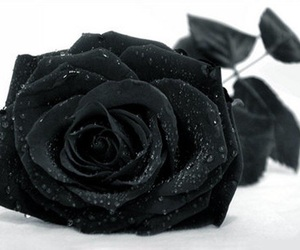 black, flowers, and black and white image