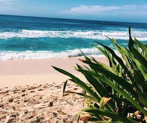 beach, life, and mar image
