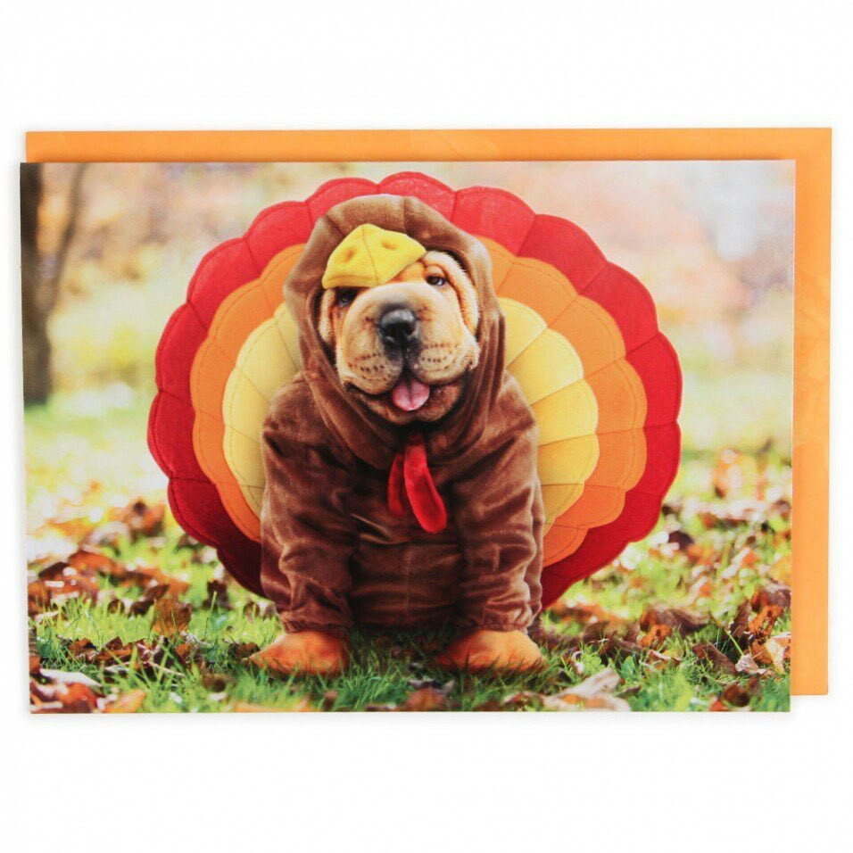 animals, autumn, and thanksgiving image