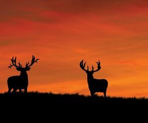 animals - orange - deer image
