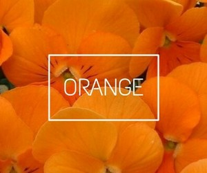 colors, orange, and tumblr image