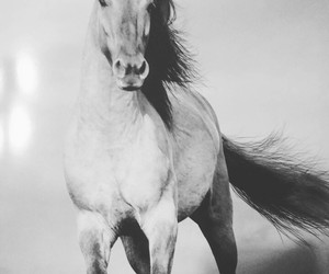 black and white, freedom, and horse image