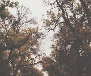 aesthetic, artsy, and autumn image