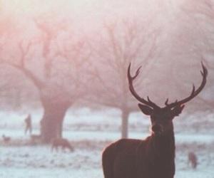 winter, deer, and animal image