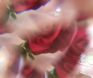 aesthetic, rose, and theme image