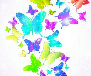 butterflies, butterfly, and colorful image
