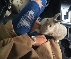 fashion, rabbit, and style image