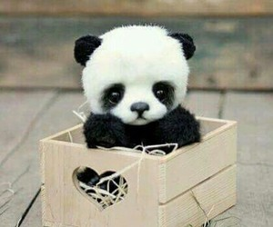 panda and animal image