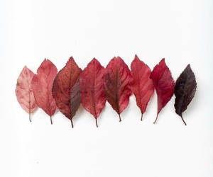 autumn, leaves, and minimalism image