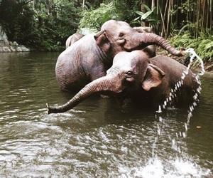 animals, elephants, and paradise image