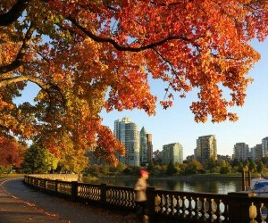 autumn, beauty, and canada image