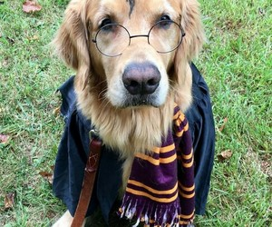 animal, dog, and harry potter image