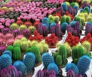 cactus, colores, and bellos image