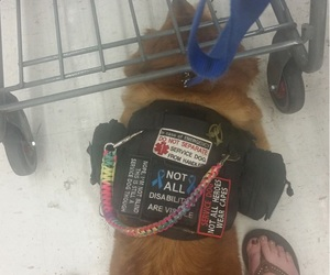 don't touch, service dogs, and don't talk image