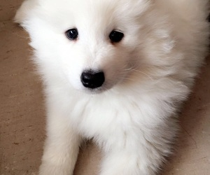 dog, dogs, and fluffy image