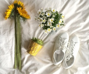 yellow, plants, and flowers image